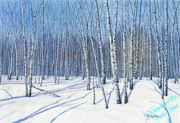 Winter Birches, Becky's woods